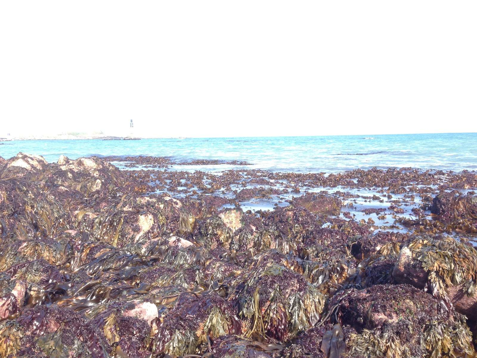 vue-algues-roscoff