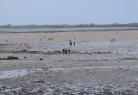 Sortie pêche à pieds aux couteaux à Saint-Pol-de-Léon