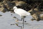 À la découverte des oiseaux à Saint-Pol-de-Léon