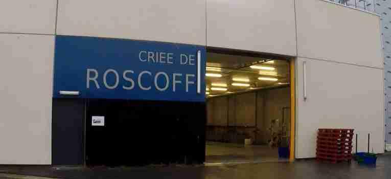 La criée de Roscoff